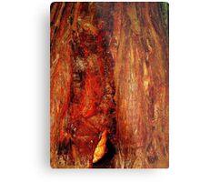Redwood Exterior # 2, California Metal Print