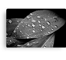 OnePhotoPerDay Series: 137 by L. Canvas Print