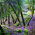 Grove, near Montgomery Woods, Northern California, Spring , 2009 by Ascender Photography