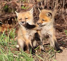 Fox Fight, Fox Fight!! by Gary Fairhead