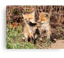 Fox Fight, Fox Fight!! Canvas Print