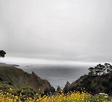 Pacific Coast by NancyC