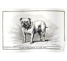 All about dogs a book for doggy people Charles Henry Lane 1900 0219 Bulldog_jpg Poster