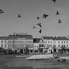 Restless birds (Cluj-Napoca) by Elisabeta Stan