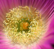 Life is a flower by Joy Watson