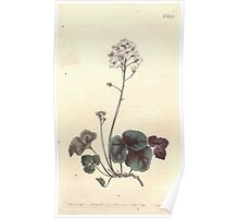 The Botanical magazine, or, Flower garden displayed by William Curtis V13 V14 1799 1800 0046 Cardamine Trifolia Three Leaved Cuckow Flower Poster