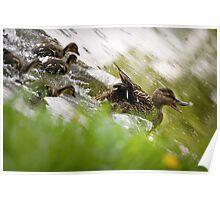 Ducks Runaway Poster