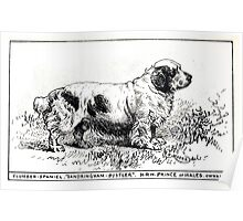 All about dogs a book for doggy people Charles Henry Lane 1900 0101 Clumber Spaniel_jpg Poster