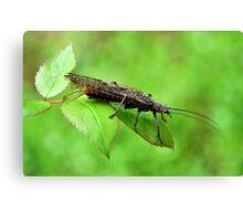 Name This Bug Canvas Print
