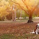 Autumn In The Park by Bevlea Ross