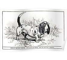 All about dogs a book for doggy people Charles Henry Lane 1900 0115 Smooth Basset Hound_jpg Poster