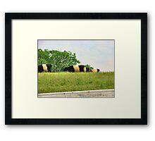 Oreo Cattle Framed Print