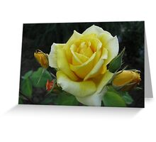Yellow roses of my garden!!! Greeting Card
