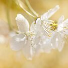 Blossom by Mandy Disher