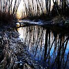Reflections of Winter by Mike  Kinney