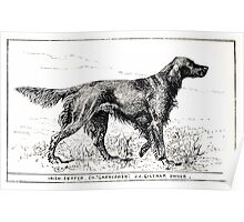 All about dogs a book for doggy people Charles Henry Lane 1900 0085 Irish Setter_jpg Poster