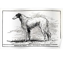 All about dogs a book for doggy people Charles Henry Lane 1900 0137 Borzoi Oh_jpg Poster