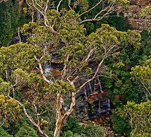 A Gum Tree View by jayneeldred