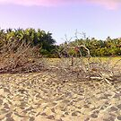 the tree and the sand by Br0kenAngel