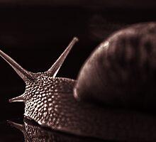 snail monochrome by stelio