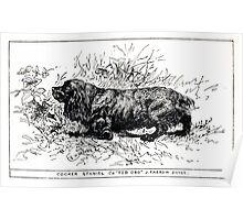 All about dogs a book for doggy people Charles Henry Lane 1900 0113 Cocker Spaniel_jpg Poster