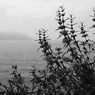 Montreux Esplanade by John Douglas
