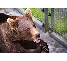 Hot bear Photographic Print