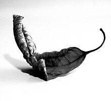 LEAF SER.2 (cat) by Paul Quixote Alleyne