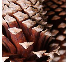 Wooden Puzzle Photographic Print