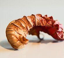LEAF SER.6 (shrimp) by Paul Quixote Alleyne