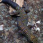 Southern Spotted Velvet Gecko by weigi