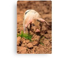 Cute Piglet Canvas Print