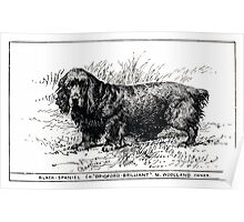 All about dogs a book for doggy people Charles Henry Lane 1900 0107 Black Spaniel_jpg Poster
