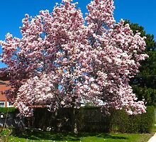 Magic Magnolia Tree by MarianBendeth