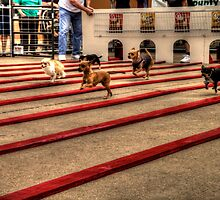 Ah Chihuahua! by Terence Russell