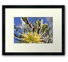 """HUNGRY BEE"" - macro Framed Print"