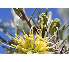 """HUNGRY BEE"" - macro Photographic Print"