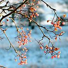 Berries for the Birds.... by DoreenPhillips