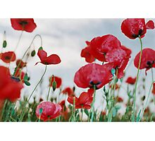 Field of Poppies Against Grey Sky  Photographic Print