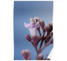 """SINGLE TINY FLOWER"" -macro Poster"