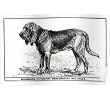 All about dogs a book for doggy people Charles Henry Lane 1900 0055 Bloodhound_jpg Poster