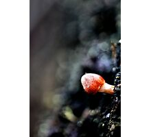 Small World Of Red Photographic Print