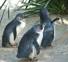Penguins (6529) by ScenerybyDesign