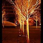 Omaha Trees by kris clark