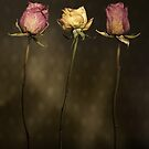 3 Roses by Peter Zentjens