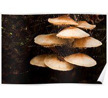 Fungi, & waterdroplets on cobwebs Poster