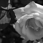Sweet Contemplation by Lozzar Flowers & Art
