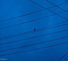 Bird on a Wire by MotherHuldah