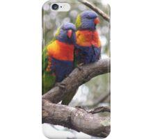 Rainbow lorikeet couple - Kensington Reserve, South Australia iPhone Case/Skin