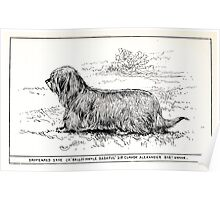 All about dogs a book for doggy people Charles Henry Lane 1900 0161 Drop Eared Skye_jpg Poster